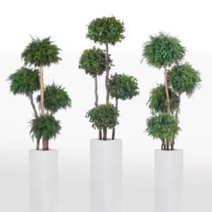 PLANTAS NATURALES PRESERVADAS